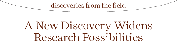 Discoveries from the Field: A New Discovery Widens Research Possibilities
